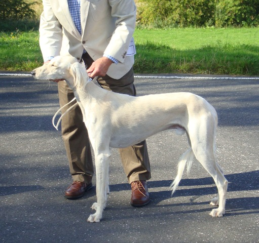 image: Class 4 Yearling Dog