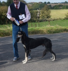 image: Class 9 Open Dog