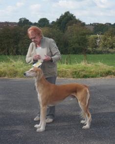 image: Class 11 Veteran Dog