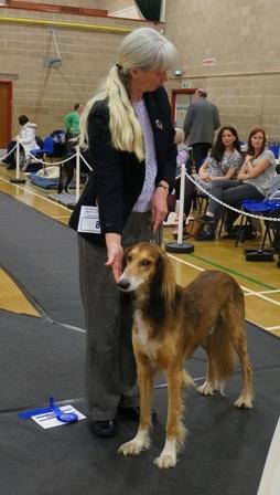 image: Class 12 Veteran Dog