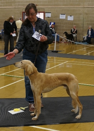 image: Class 1 Minor Puppy Dog 3 entries