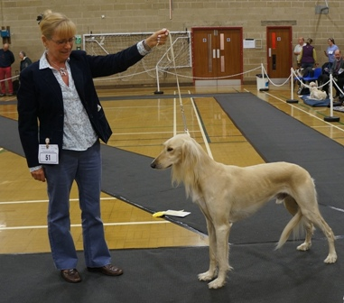 image: Class 10 Open Dog 8 entries