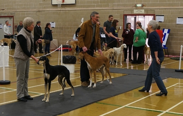 image: Class 5 Novice Dog 3 entries