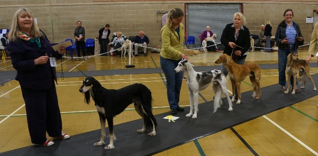 image: Class 7 Post Graduate Dog 7 entries