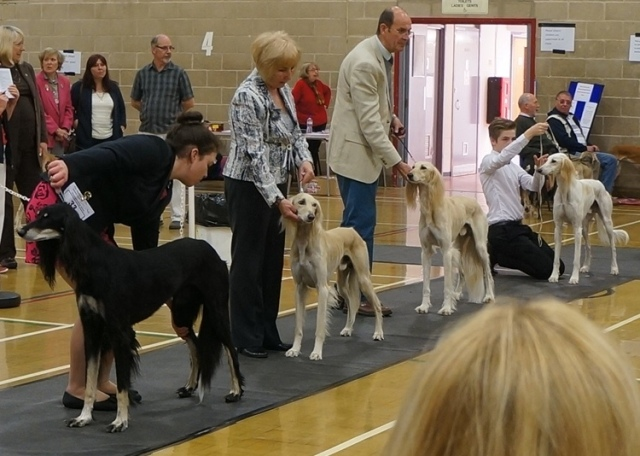 image: Class 8 Mid Limit Dog 4 entries